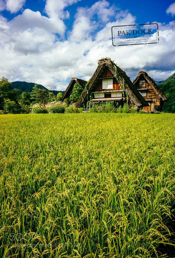Shirakawa-go fields