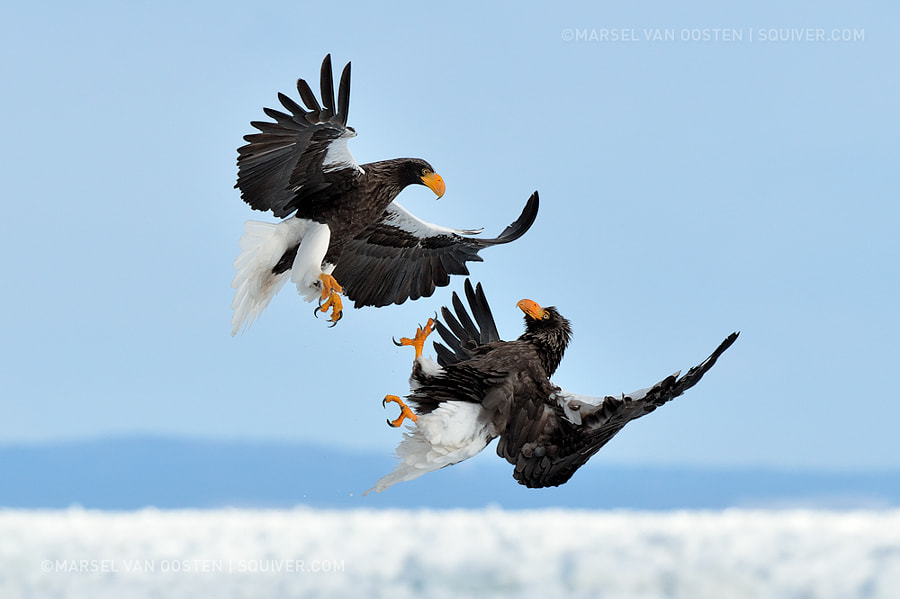 Air To Air Combat by Marsel van Oosten on 500px.com
