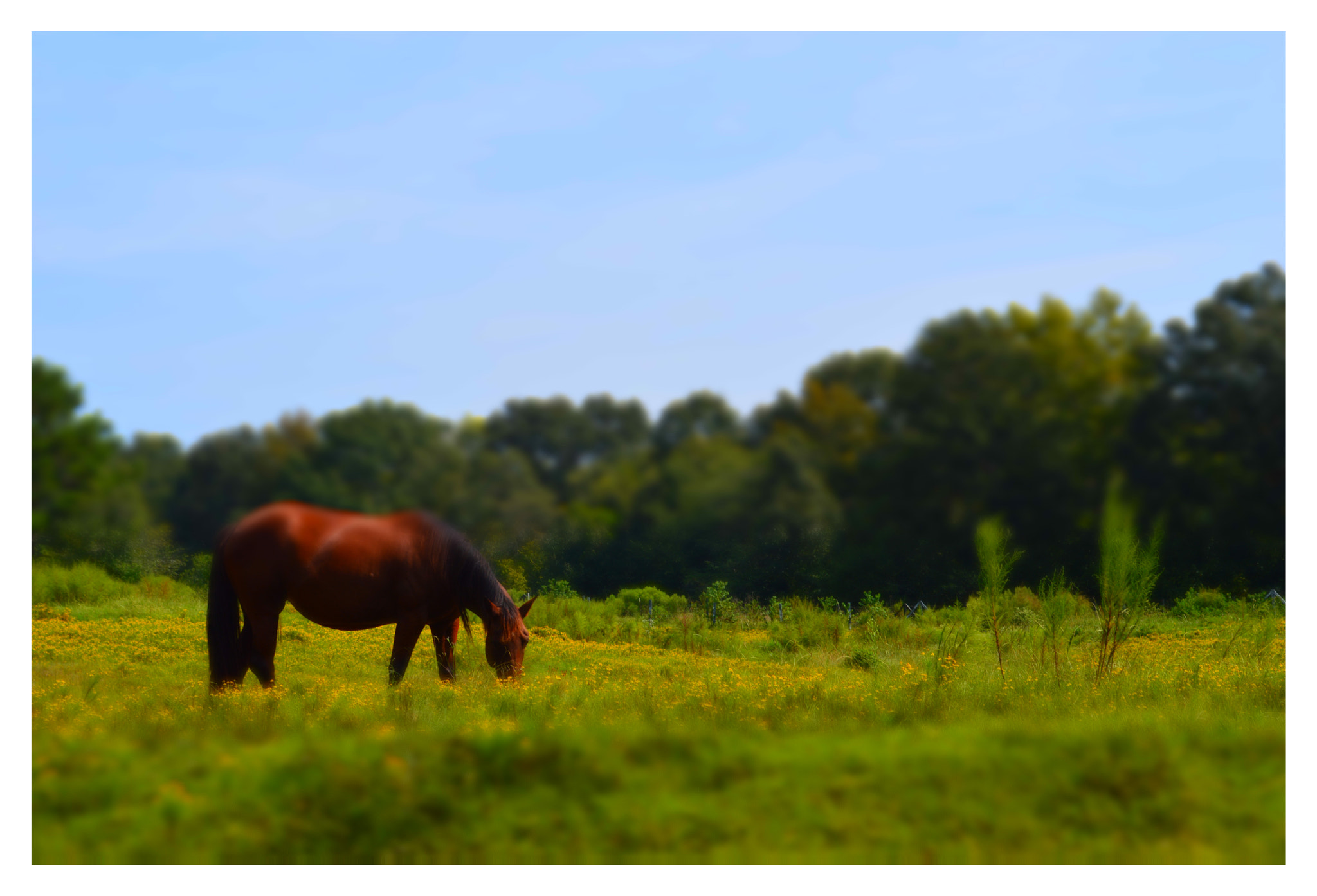 Photograph Horse In a Yellow Field by Stacy Baugher on 500px
