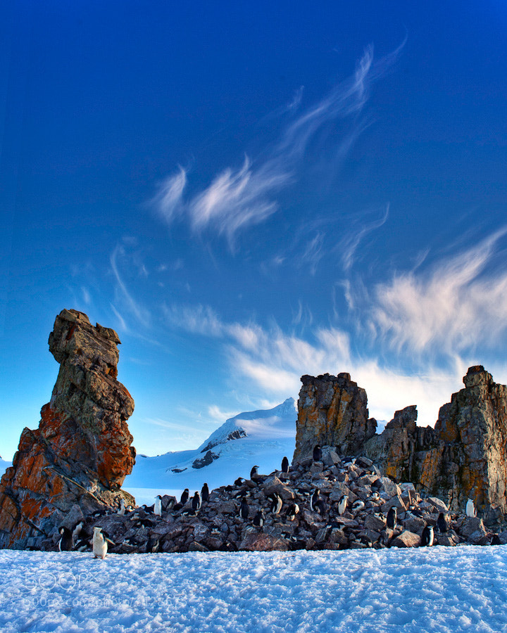 This small Chinstrap penguin rookery nestles right next to an unusual hoodoo.  We were fortunate to have such wonderful skies in a normally brutal environment.