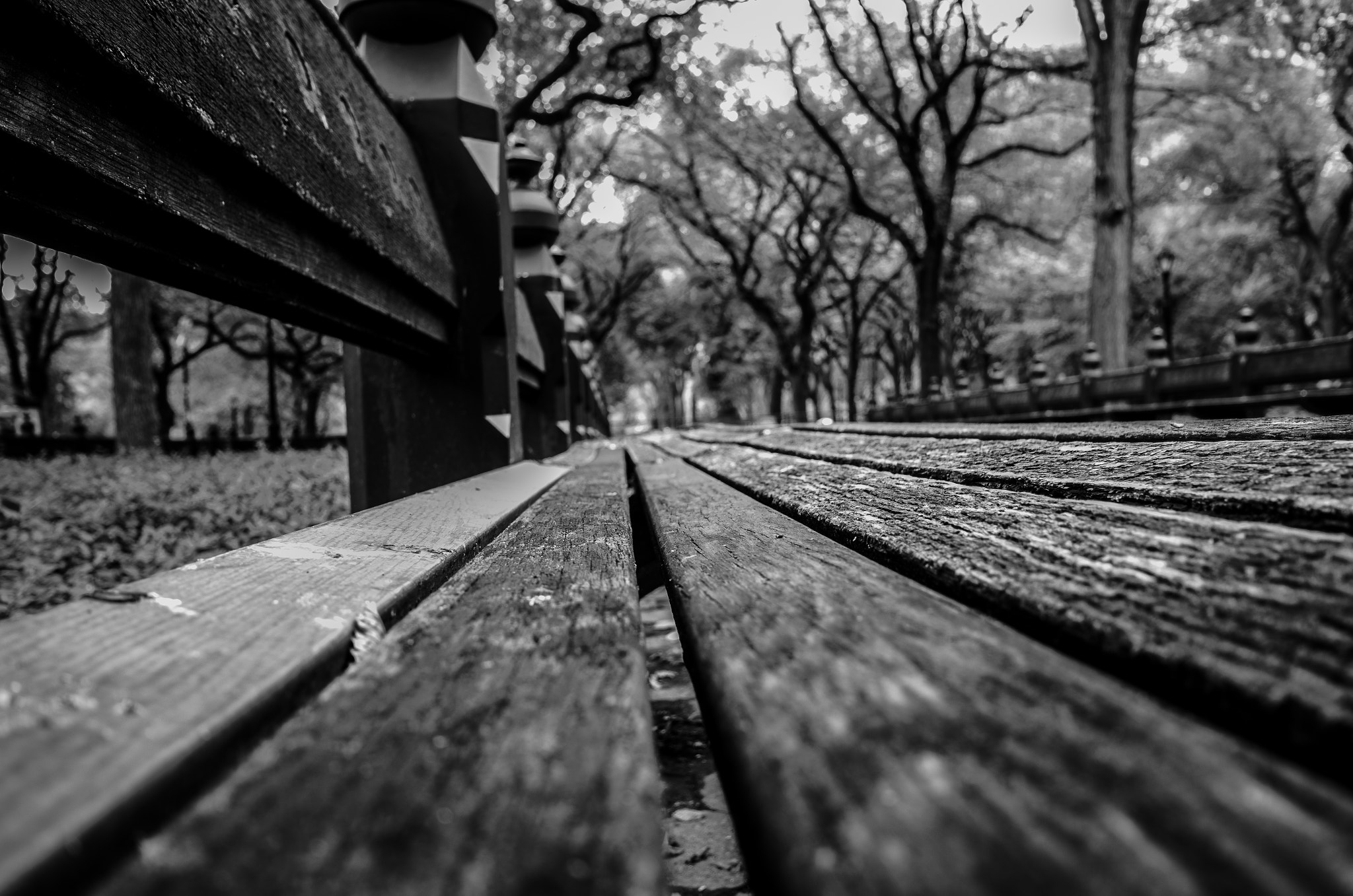 Photograph Lonely In Central Park  by Luis Rodriguez on 500px