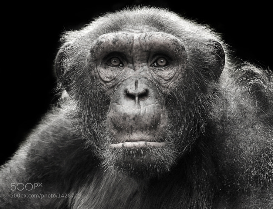 Photograph Am I human? by Prachit Punyapor on 500px