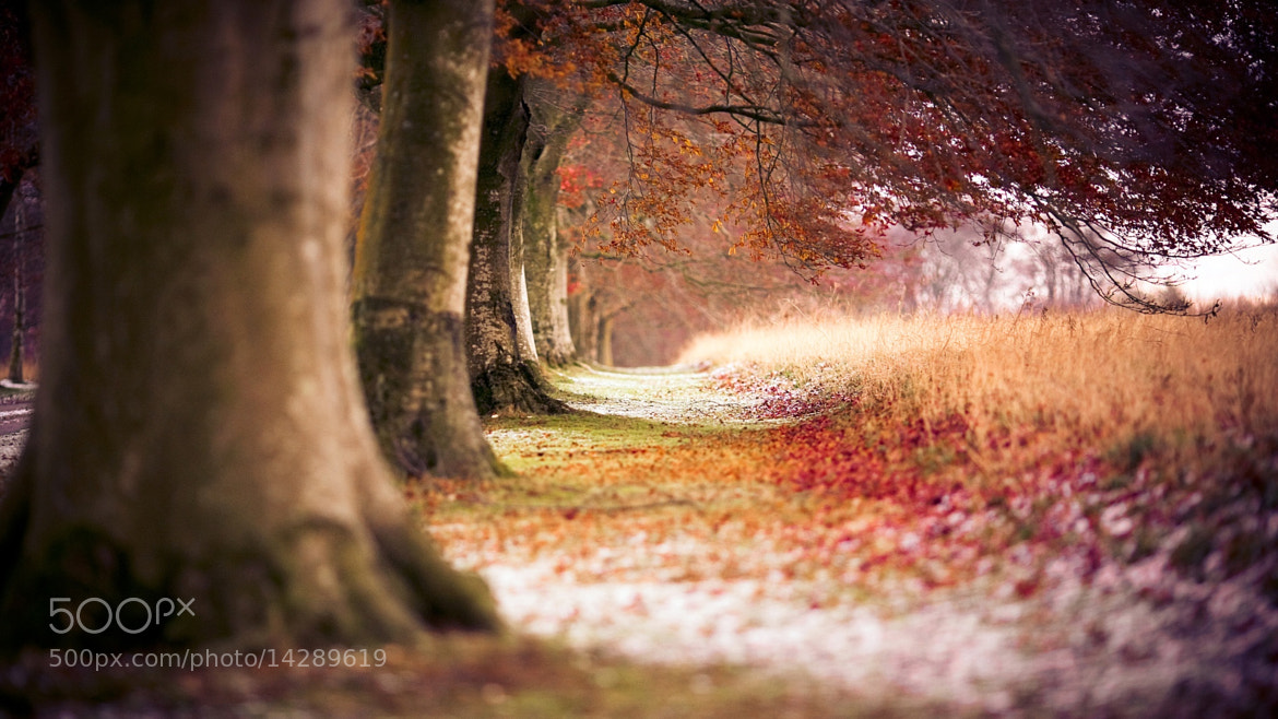 Photograph Beech autumn trees by Amit Kirpane on 500px