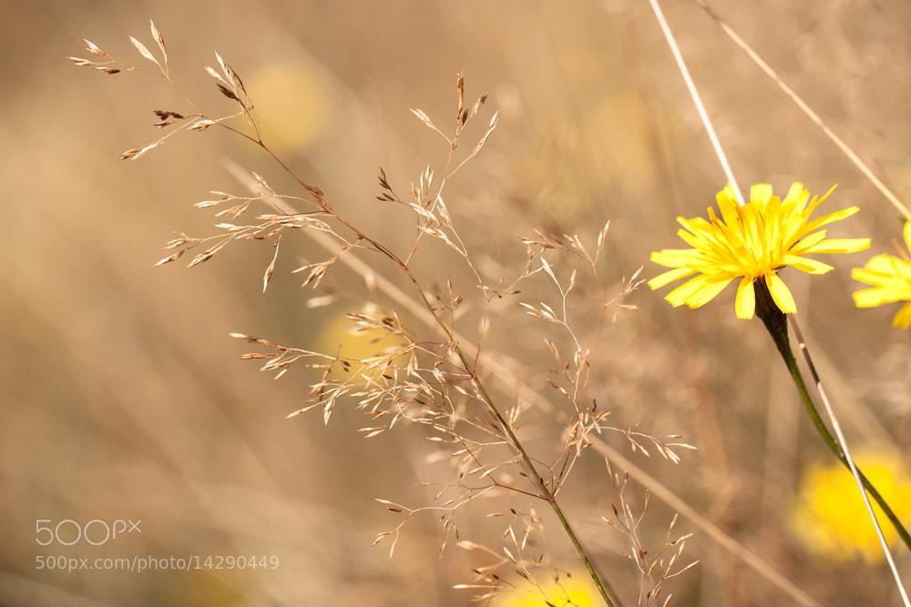 Photograph golden autumn by Marion Fanieng on 500px