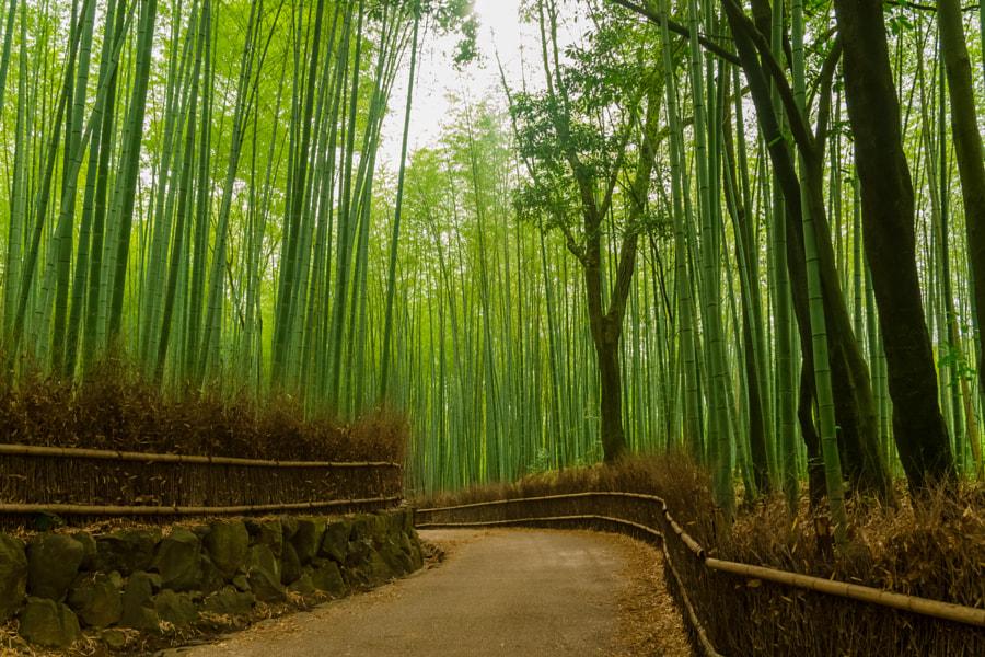 竹林の道 - 嵯峨野 / Bamboo Street - Sagano by Yuya Horikawa on 500px.com