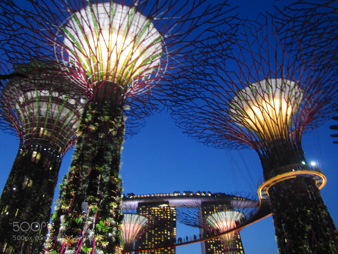 Photograph Supertrees Singapore by Audrey H on 500px