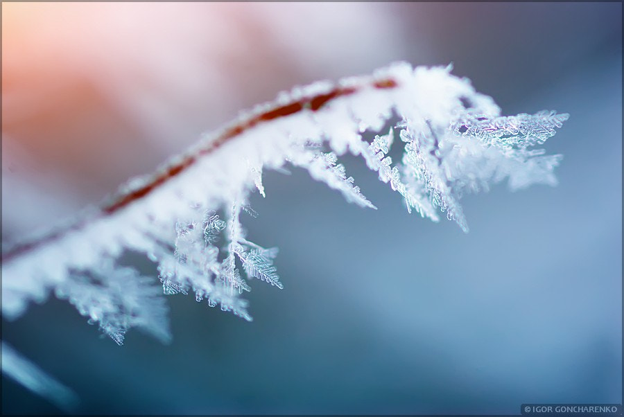 Photograph Rime on branch.  by Igor  Goncharenko on 500px