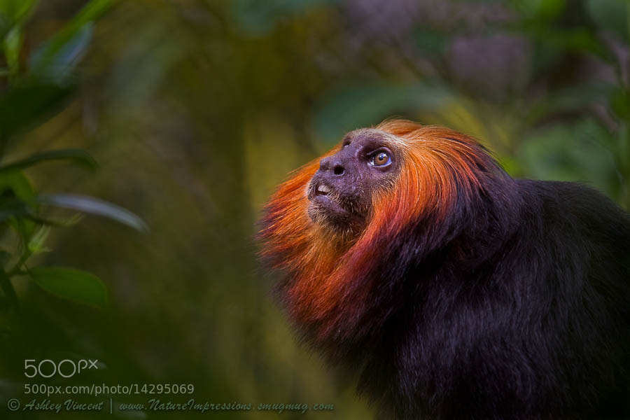 Photograph Amazonian Echoes by Ashley Vincent on 500px