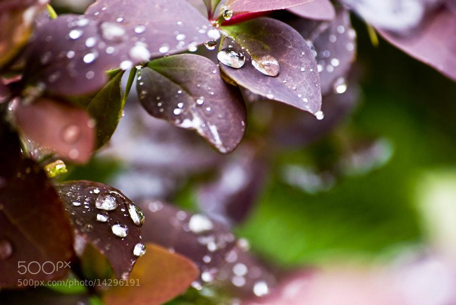 Photograph Rain Drop by Onur Güner Güray on 500px