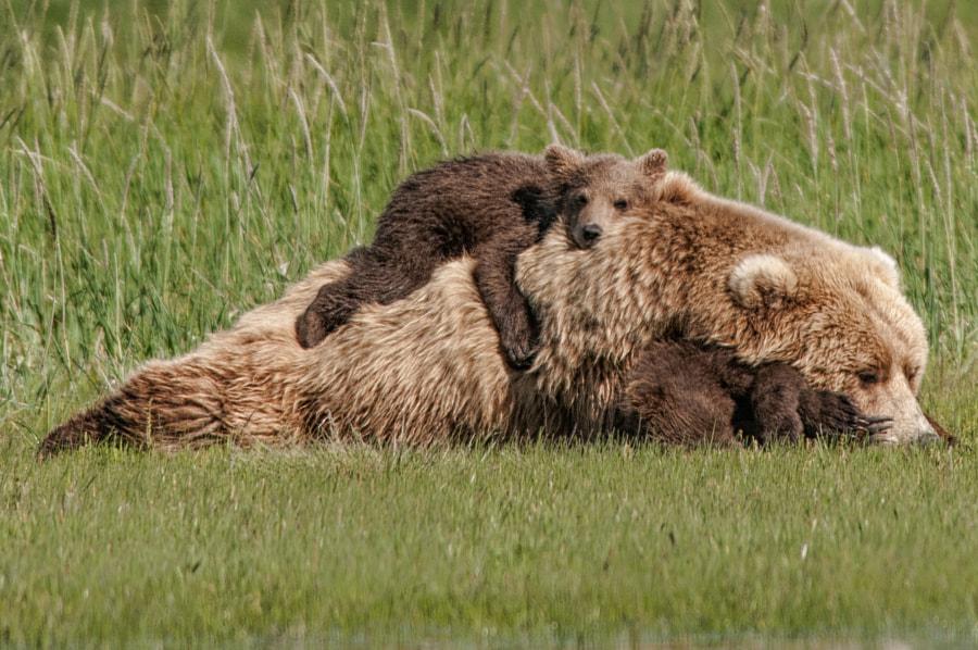 Bear Backpack by Kathleen Turner on 500px.com