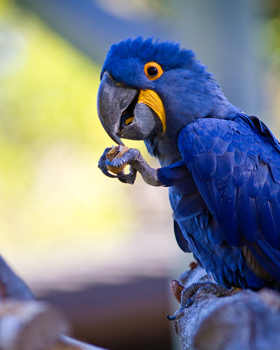 Photograph Parrot by Jean-Edouard Rozey on 500px