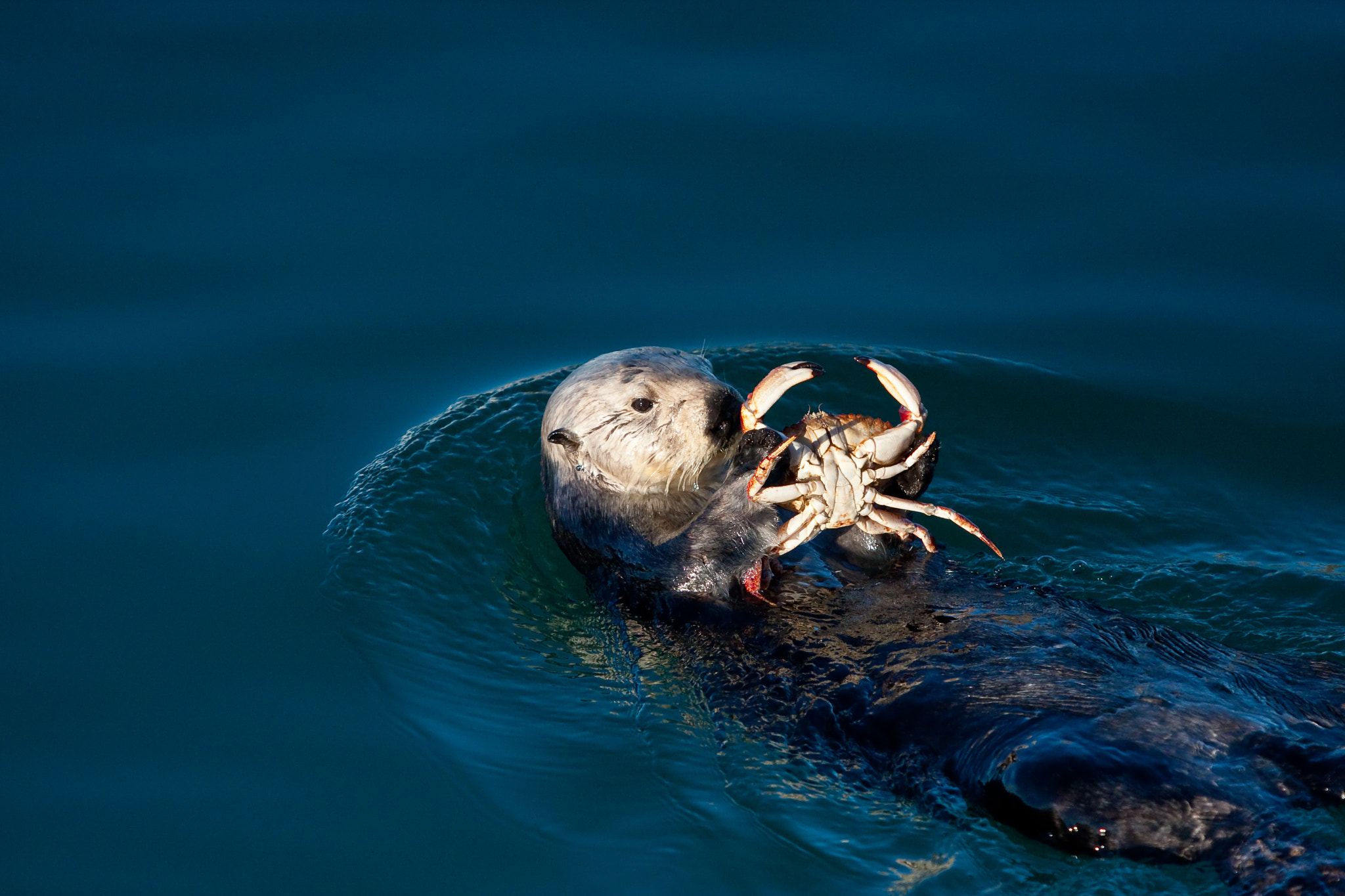 Photograph Sea Otter by Jean-Edouard Rozey on 500px