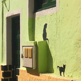 wall cats by Małgosia Szymczyk (maGosia)) on 500px.com