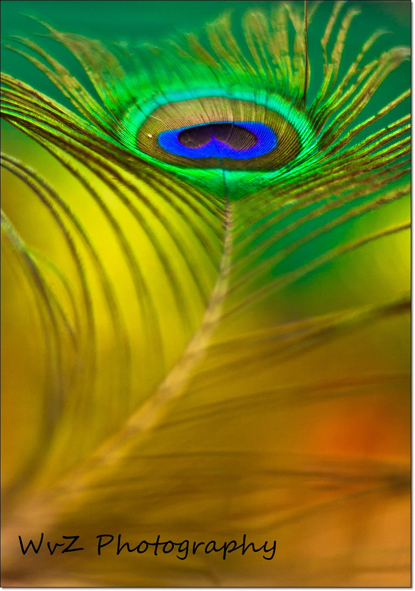 Photograph Feather by Wendy Van Zyl on 500px