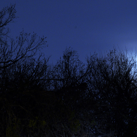 Moon through the brush, Pentax K-30