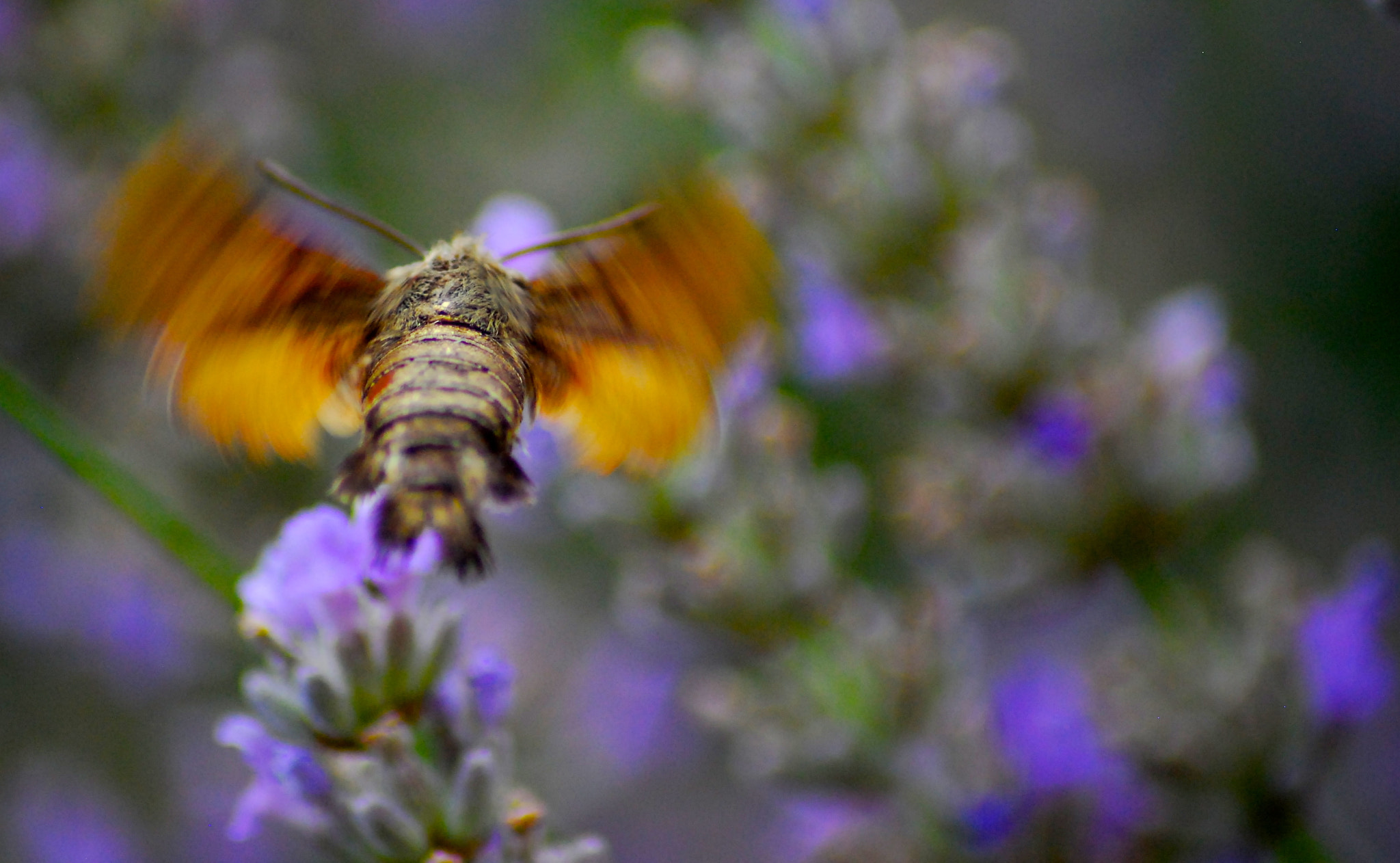 Photograph The fly by Jules Calop on 500px