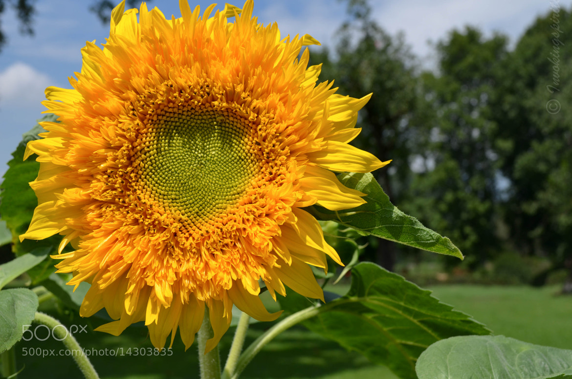 Photograph Sunshine by Tarun Sharma on 500px