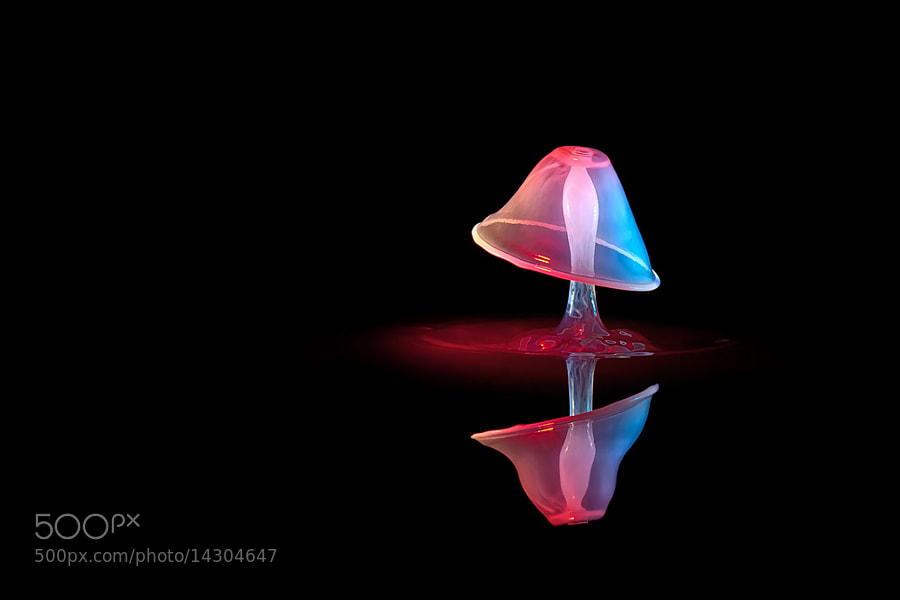 Photograph Mushroom in the dark by Markus Reugels on 500px