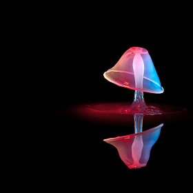 Mushroom in the dark by Markus Reugels (MarkusReugels)) on 500px.com