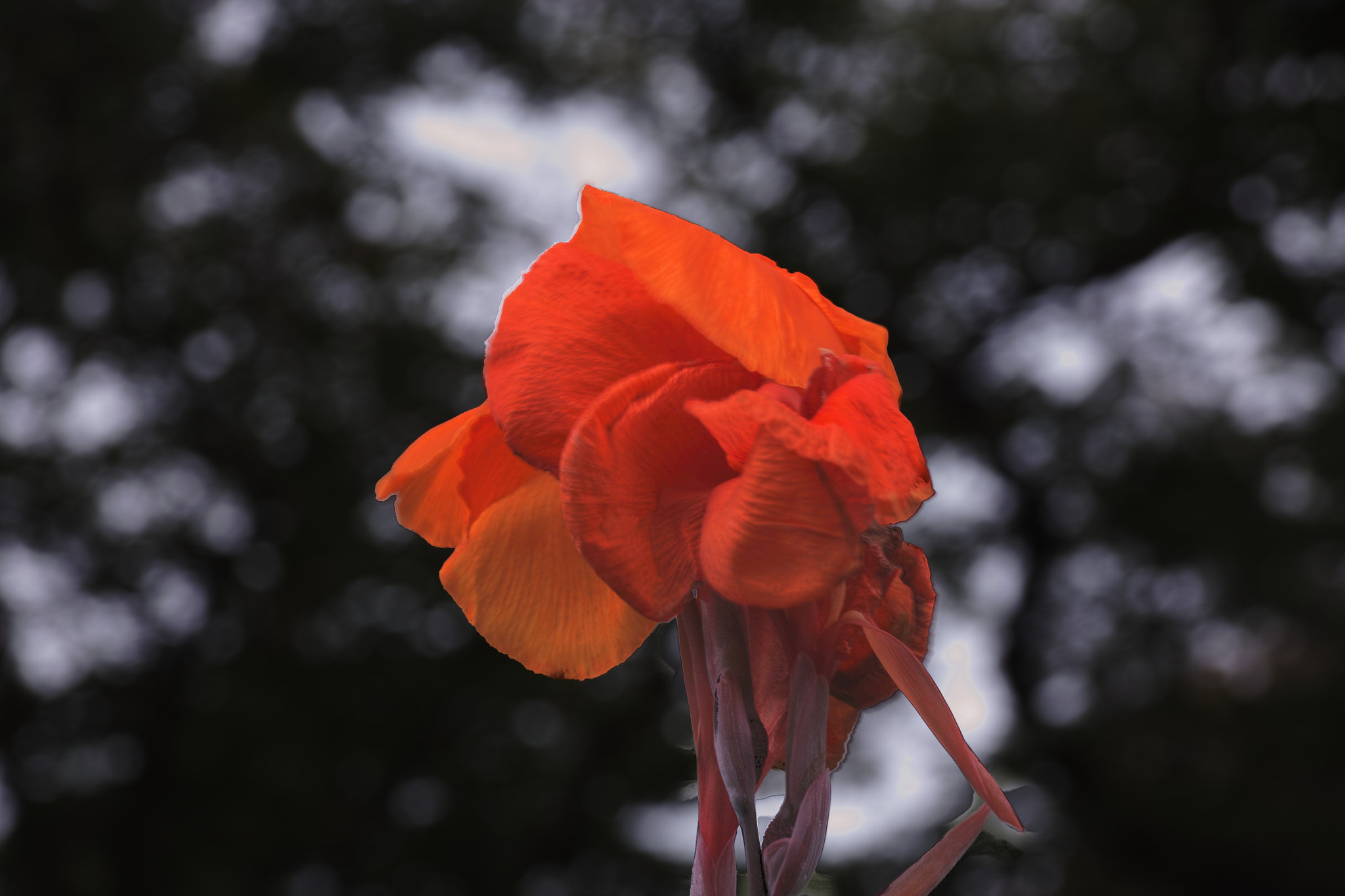 Photograph Orange flower by marbee .info on 500px