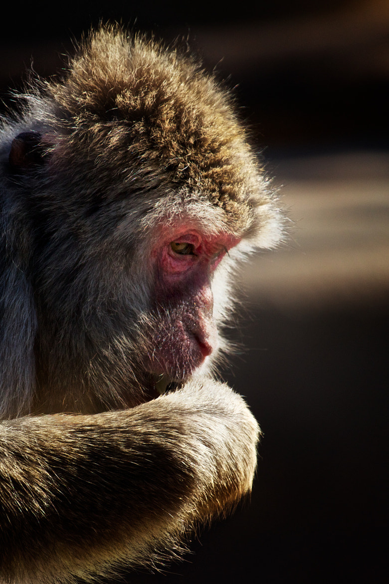 Photograph Thinking monkey by Claudio Cavalensi on 500px