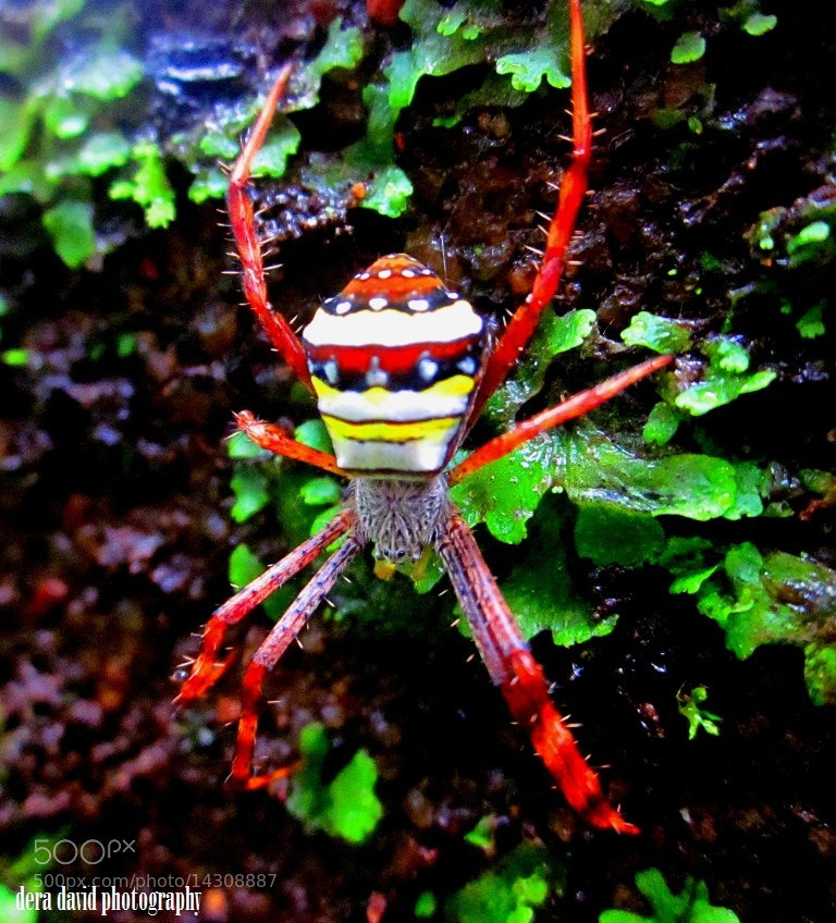 Photograph Spideee by dera david on 500px