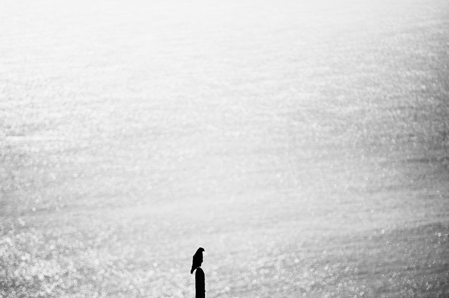 ... by Rui Caria on 500px.com