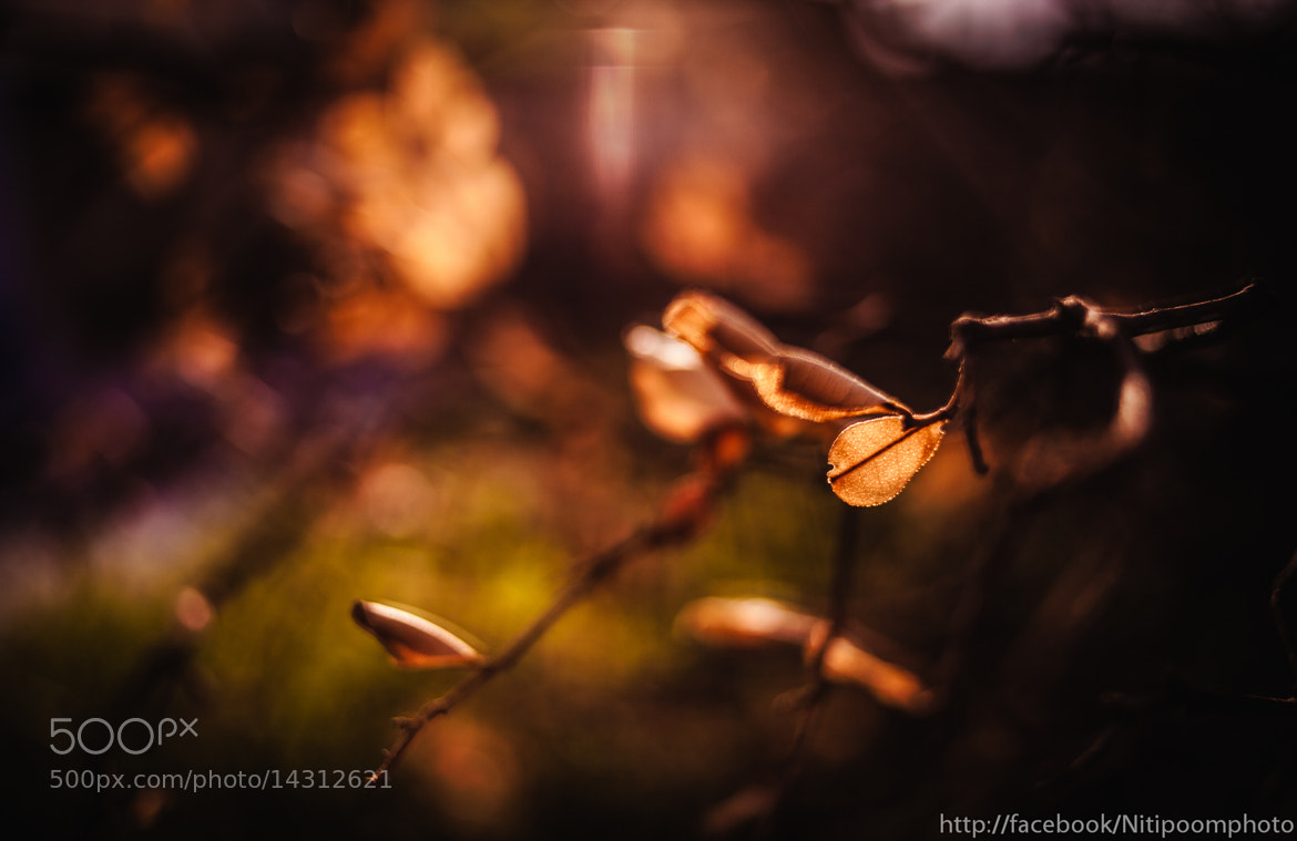 Photograph warm leaf by Nitipoom S on 500px