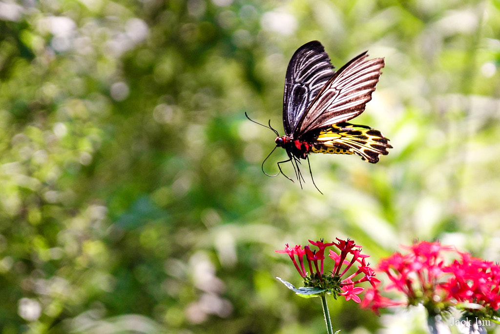 Photograph The butterfly by 軒銘 劉 on 500px