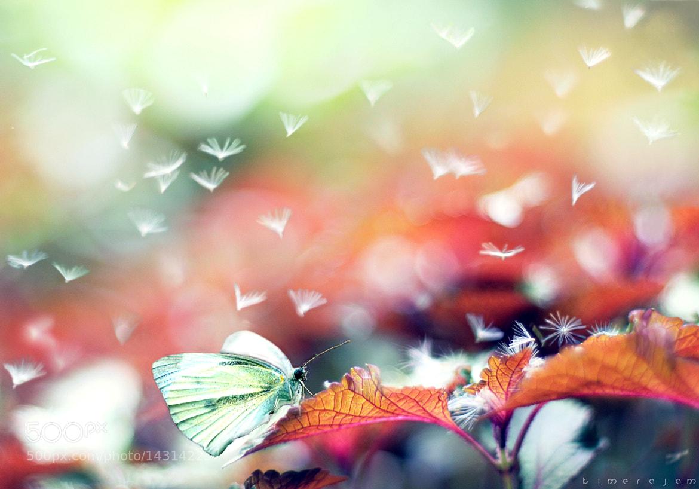 Photograph wonder garden by kimera jam on 500px