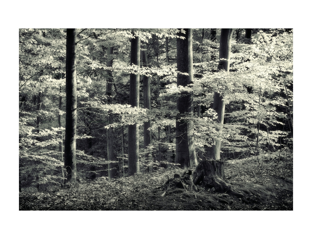 Photograph FOREST by Gilles MOLINIER on 500px