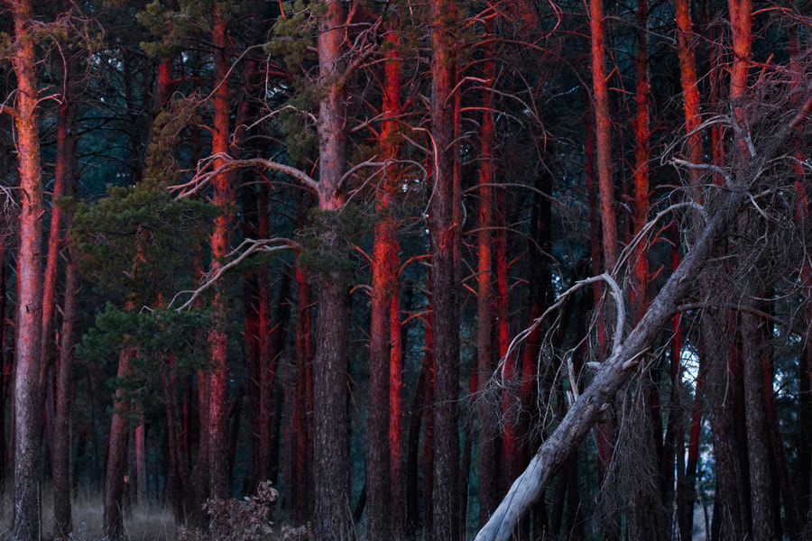 Photograph Red Forest by Javi Roces on 500px