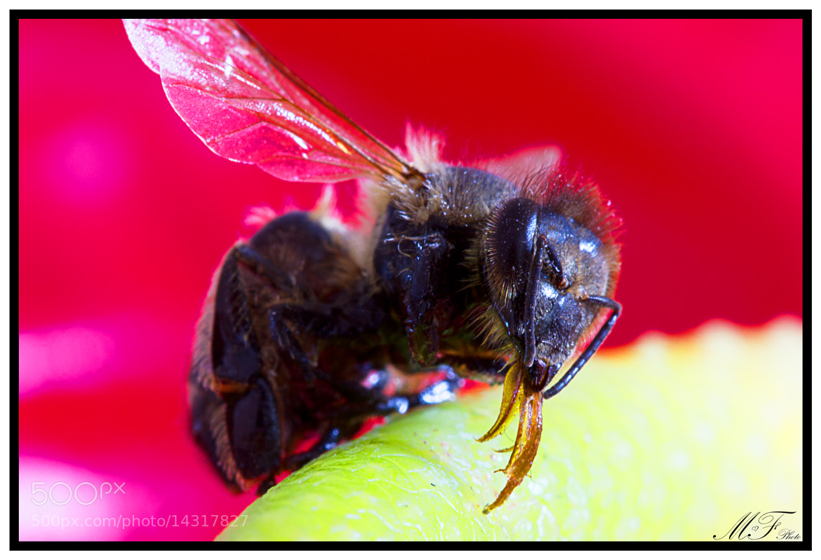 Photograph bee by Florian Klug on 500px