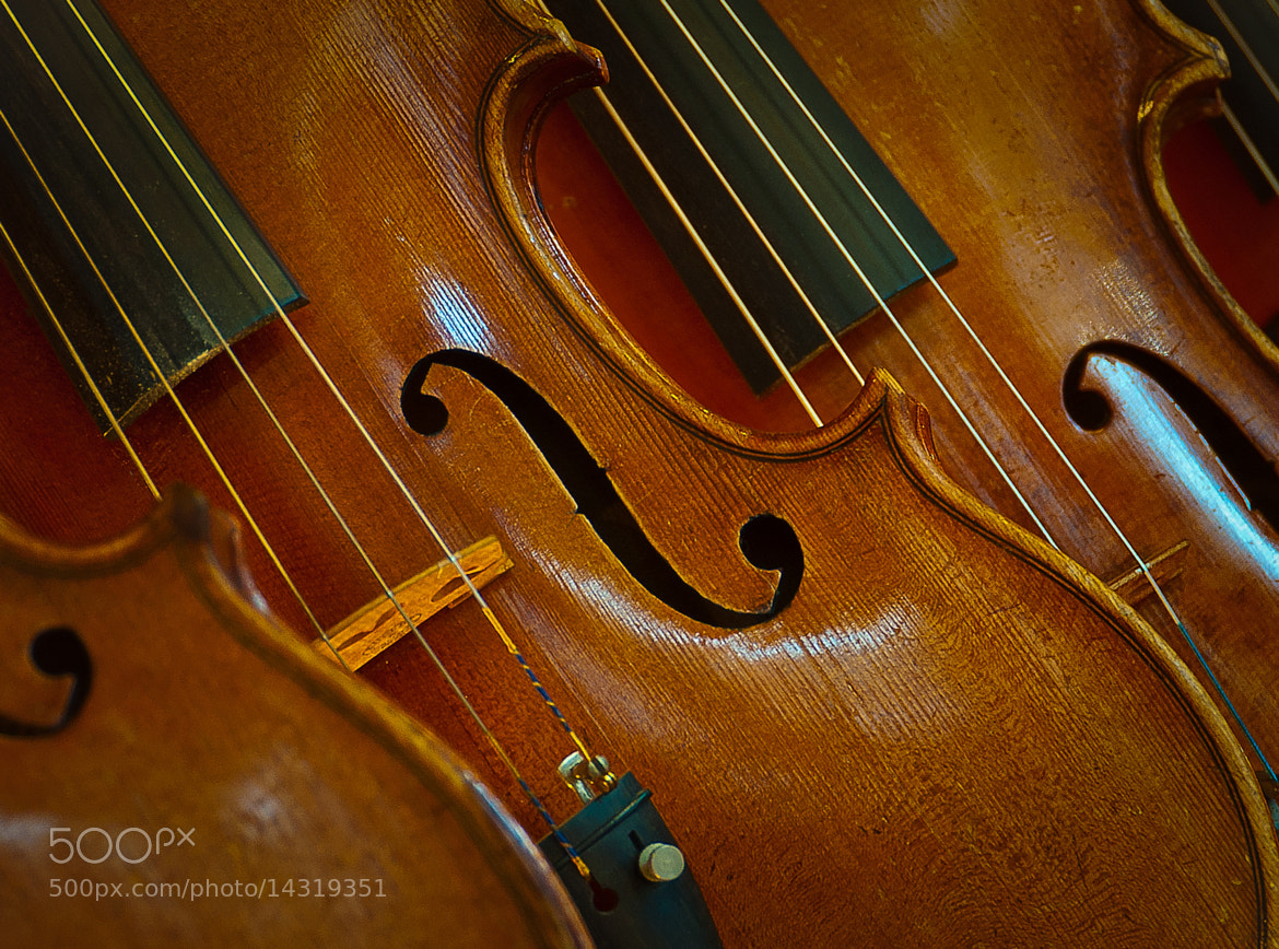 Photograph Violin Concerto by Phil  Pippo on 500px