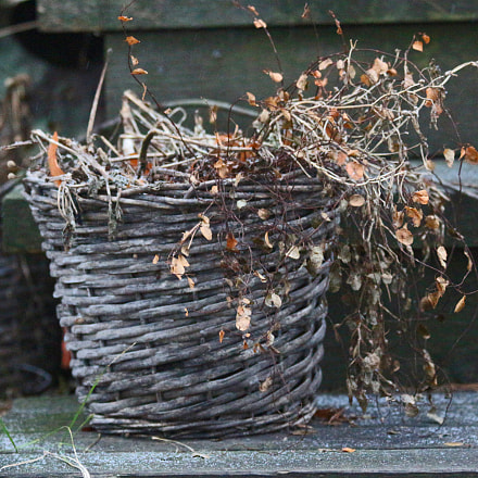 Old basket with dried, Canon EOS KISS X7, Canon EF 70-300mm f/4-5.6 IS USM