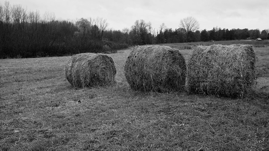 Hey Hay by Nancy Lundebjerg on 500px.com