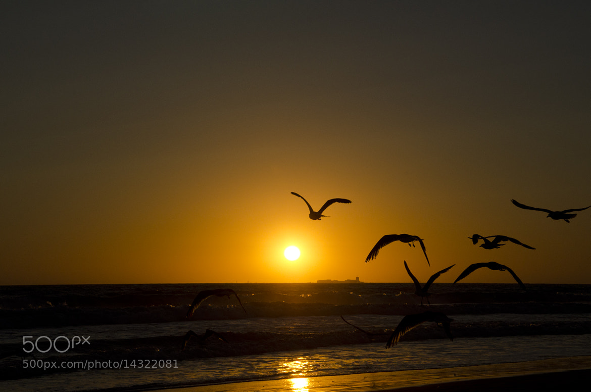 Photograph atardecer, la barrosa by Miguel Bustos on 500px
