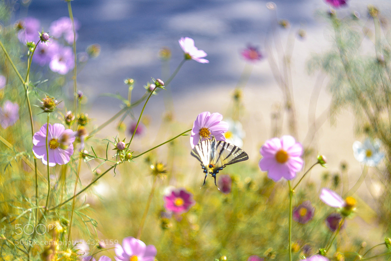 Photograph The butterfly by Akidzuki Borenkov on 500px