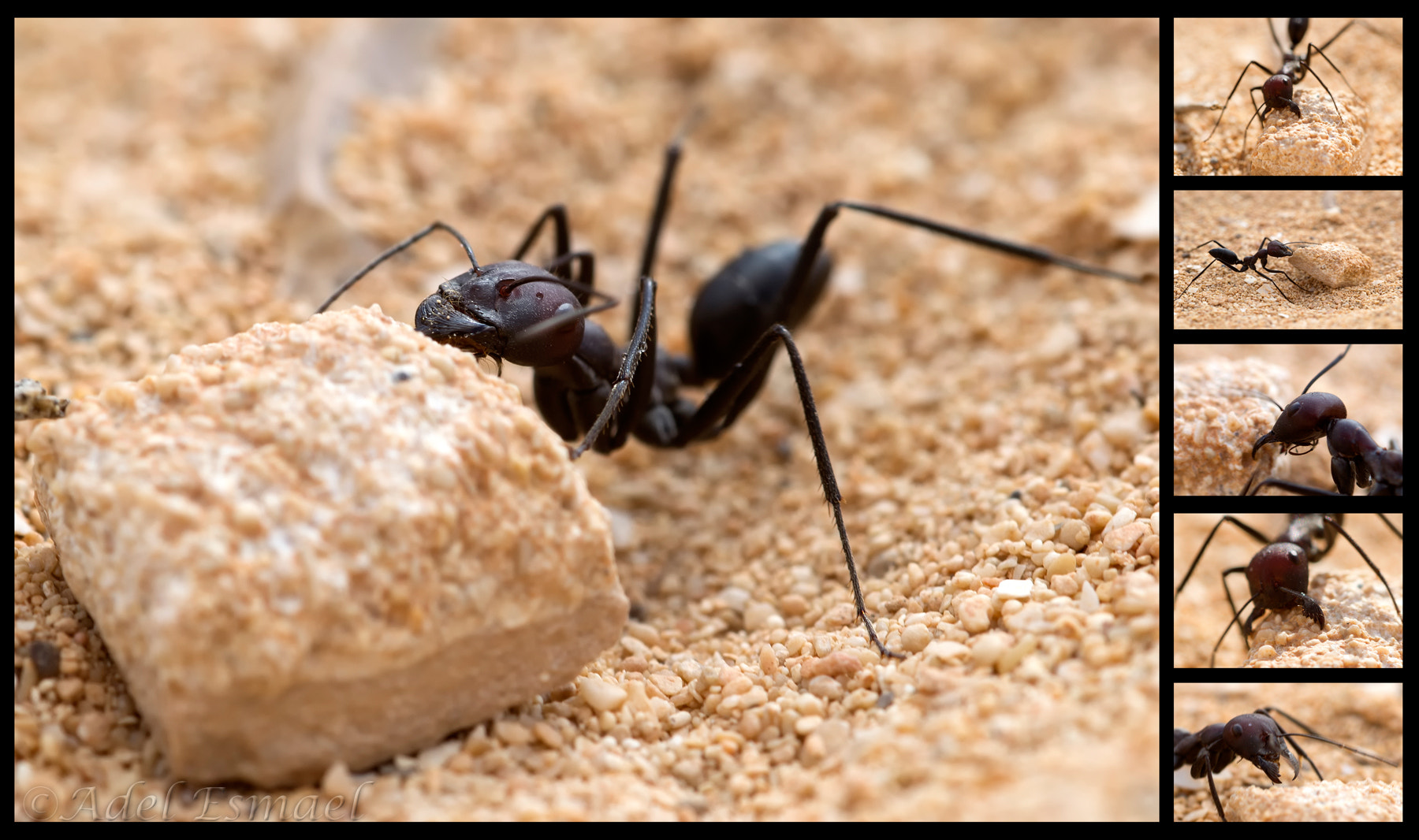 Photograph A Very Busy Ant! by Adel Esmael on 500px