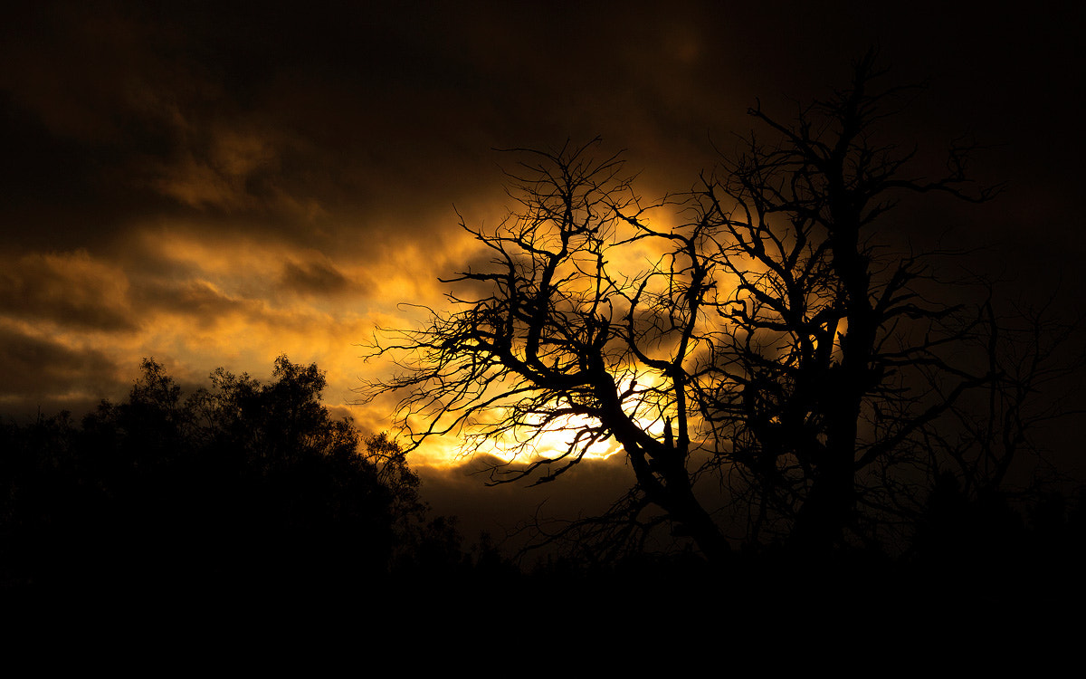 Photograph Tree and Sunset by Federico Opfinger on 500px
