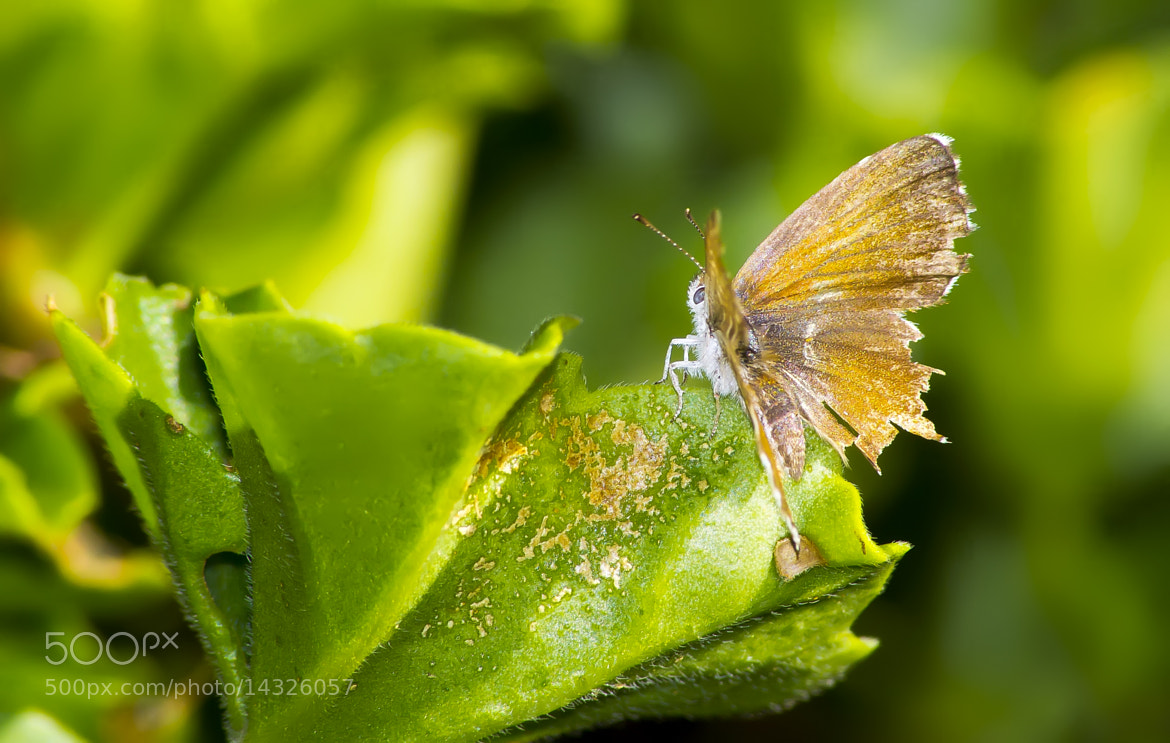 Photograph Butterfly by Giacomo Zannini on 500px