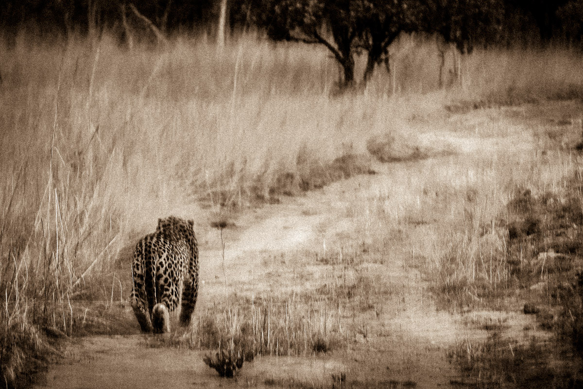 Photograph Africa by Gorazd Golob on 500px