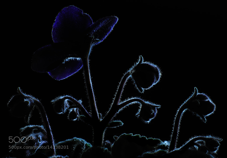 Photograph silueta by Mario Boh on 500px