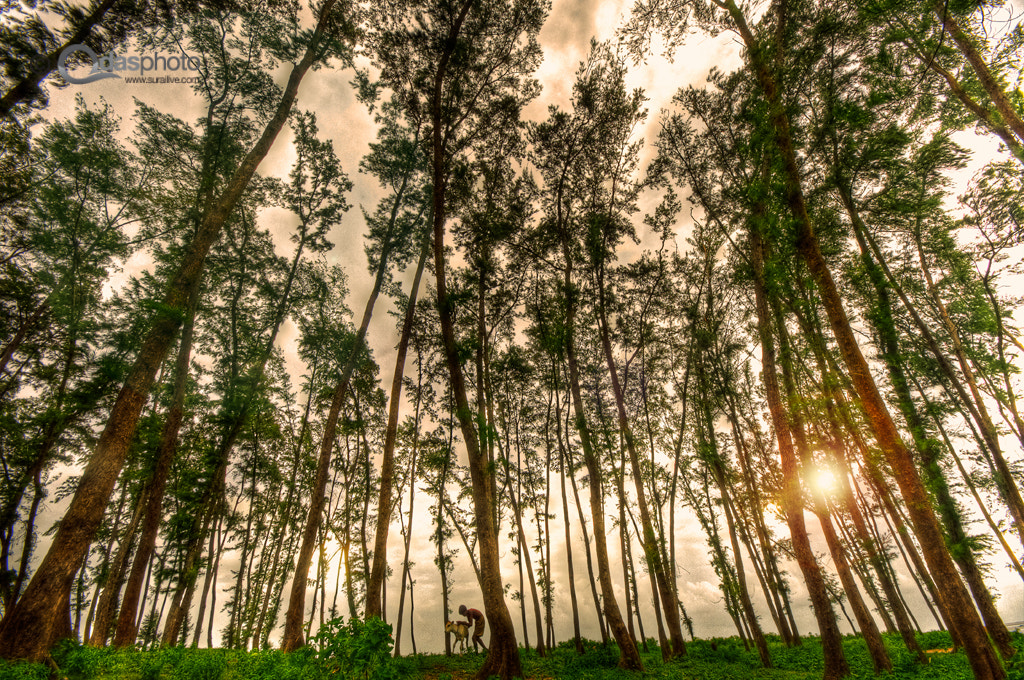 Photograph the golden hour by Surajit das on 500px