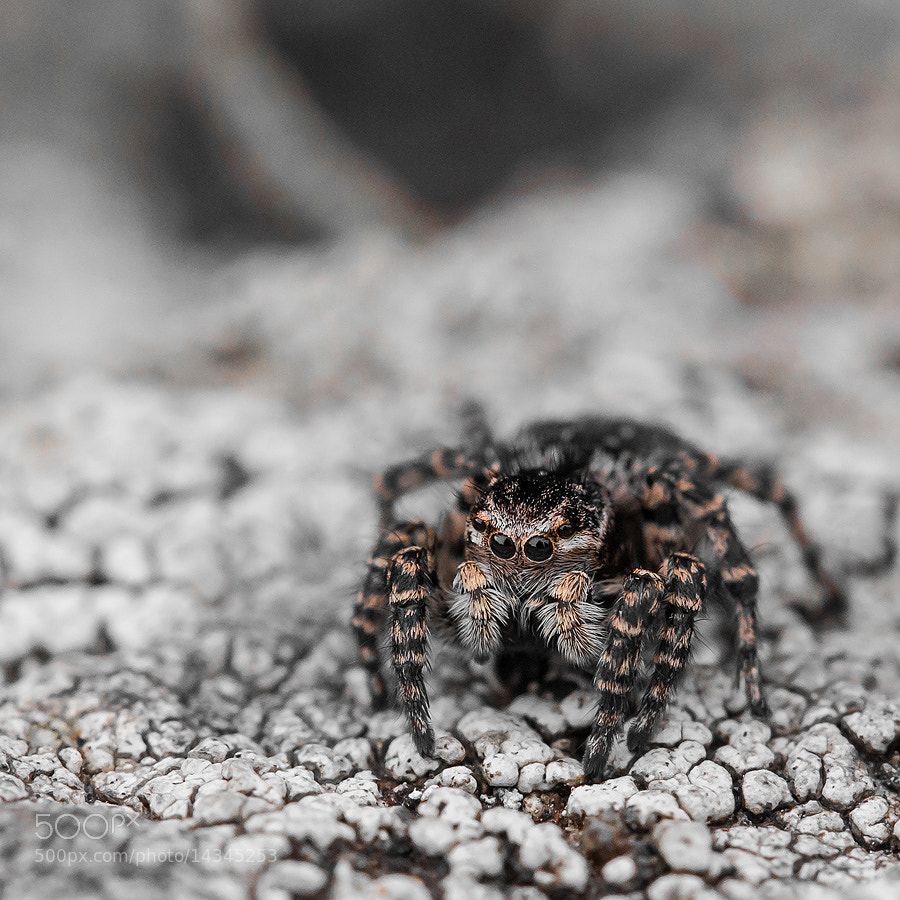 Photograph Spider Man by Ove Bjerknes on 500px