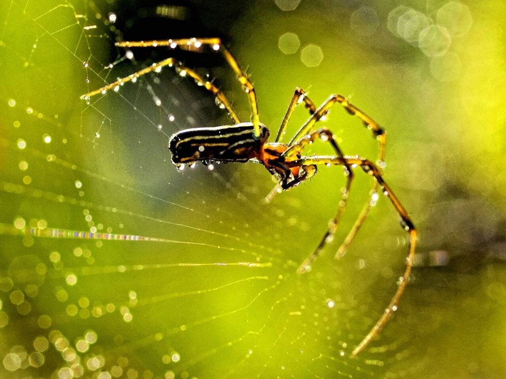 Photograph spider in the rain by Irawan Subingar on 500px