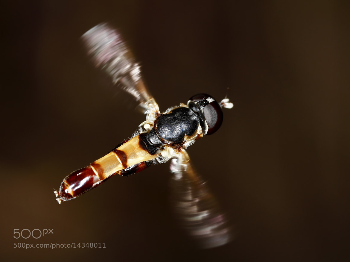 Photograph Hovering by Salah Baazizi on 500px
