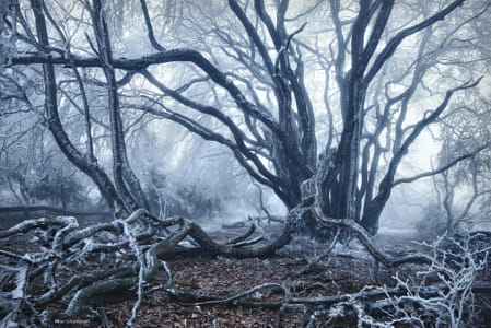 Mother Of The Forest by Brian Wilson on 500px