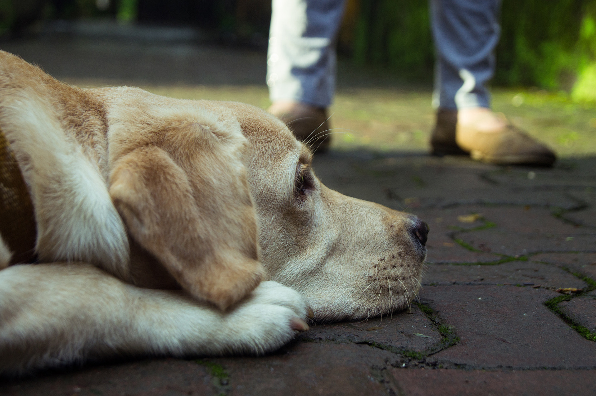 Photograph Lazy Tubby  by Aniket Goswami on 500px