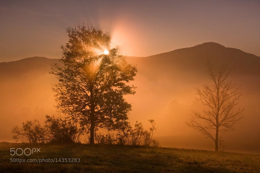 Photograph Morning fog  by Daniel Řeřicha on 500px